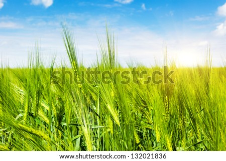 Summer field and sunlight in blue sky. Ukraine, Europe. Beauty world. - stock photo