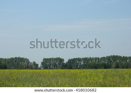 Summer field background - stock photo