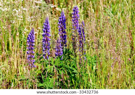 Summer field meadow flowers and grass - stock photo