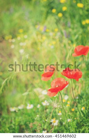 Summer field meadow with red poppy flowers and green grass, retro toned