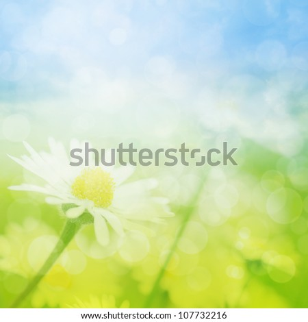 Summer field of chamomile flowers with bokeh lights. - stock photo