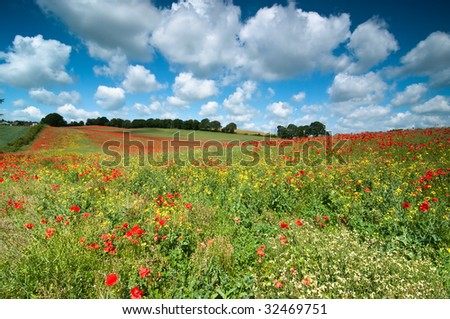 Summer field planted with poppies stretching into the distance