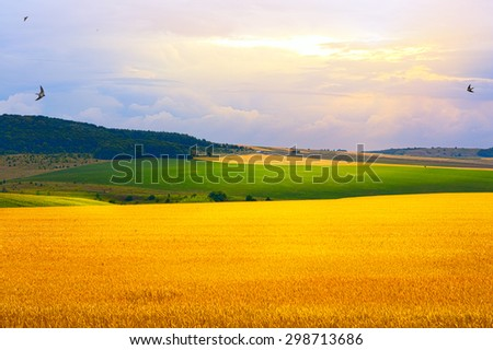summer field, sunrise and blue sky - stock photo