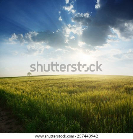 Summer field with tree and clouds - stock photo