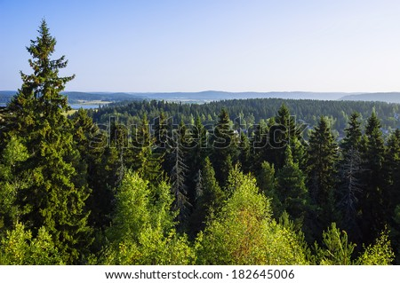 Summer fir forest landscape (Karelia, Russia) - stock photo