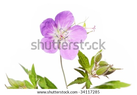 summer flora against white background. useful design element.