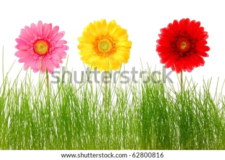 summer flowers and grass isolated on white background - stock photo