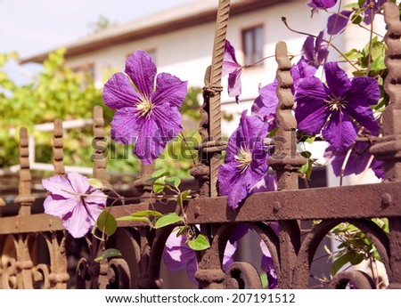 summer flowers on fence