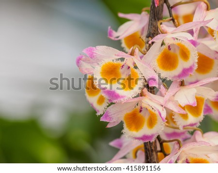 the human the orchid and the Orchid children, meanwhile, may develop behavior or mood problems in  a completely new way to think about genetics and human behavior.