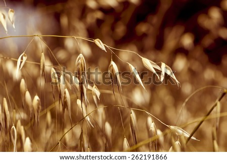 summer fluffy grass background in the brown tones  - stock photo