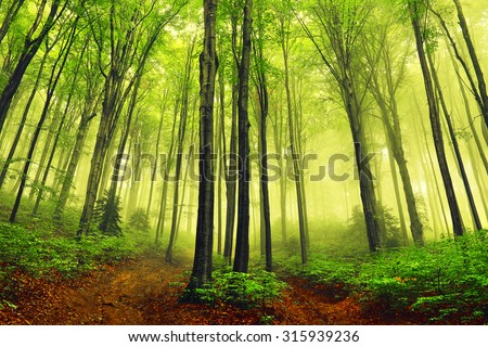 summer fog in the forest - stock photo