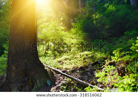 Summer forest - stock photo