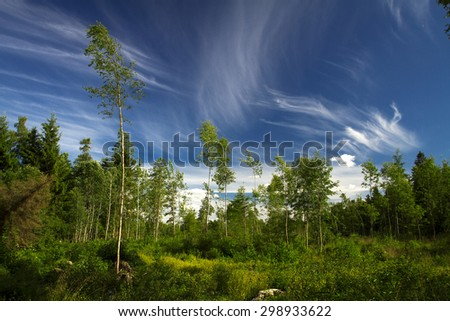 Summer forest and swamp Europe. sunny day - stock photo