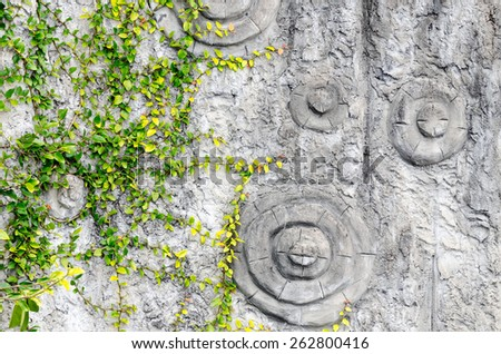 Summer forest background. Green leaves on gray tree bark. Nature background - stock photo