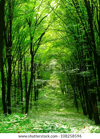 Summer forest. Nature green wood sunlight. - stock photo