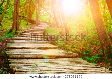 Summer forest pathway in plitvice national park-Croatia - stock photo