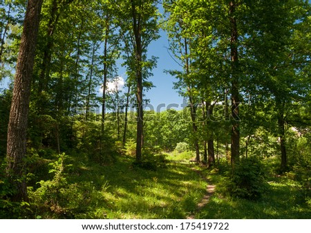 summer forest trail - stock photo