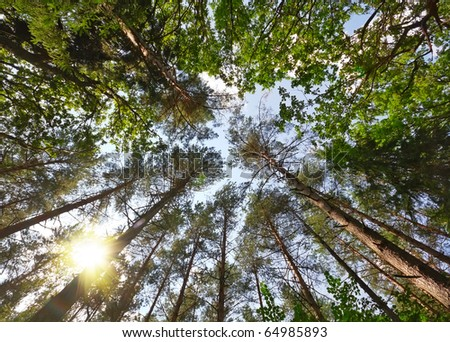summer forest, view from below - stock photo
