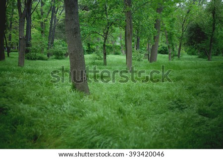 Summer forest with lush green leaves and grass - stock photo