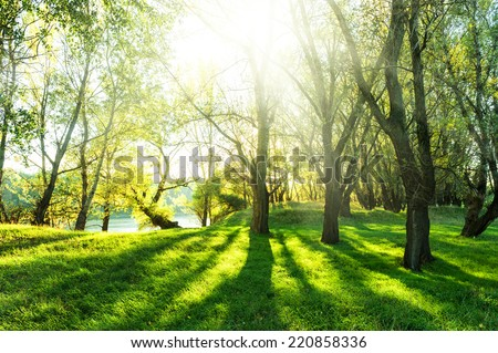 summer forest with sun and shadow - stock photo