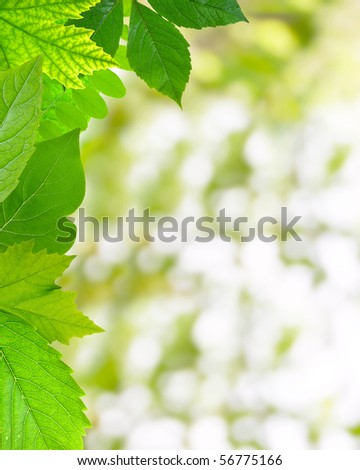 Summer Frame â?? Mixed  leaves on abstract background - stock photo