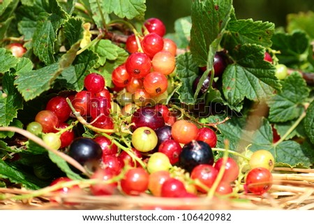 Summer garden, flowers and berries. - stock photo