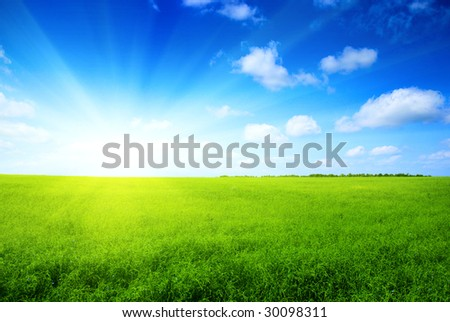 summer grass and blue sky