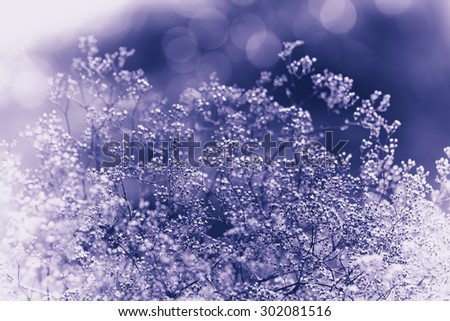 Summer grass and wildflower background. - stock photo