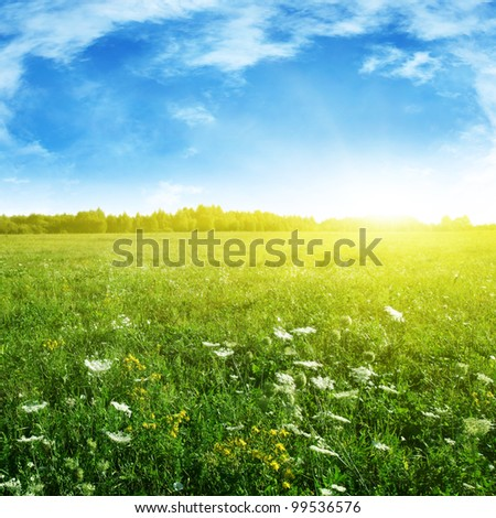 Summer grass field and sunlight in blue sky. - stock photo