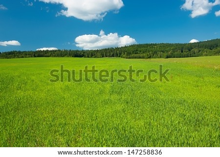 Summer grassy fields with trees in the background