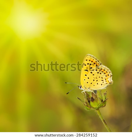 Summer green background with butterfly and sun. - stock photo