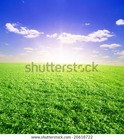 summer green field