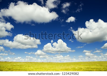summer green meadow. Nature composition. - stock photo