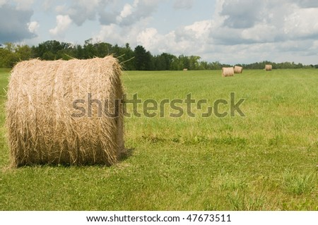 summer hay bale in field of green on cloudy summer day in northern Minnesota - stock photo