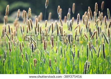 summer herb on green meadow - stock photo