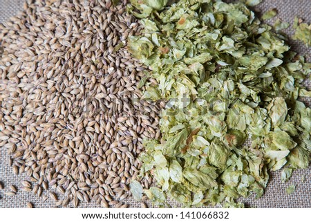 Summer hops and amber malt, beer brewing ingredients. - stock photo