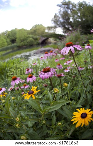 Summer in Central Park by the pond with flowers - stock photo