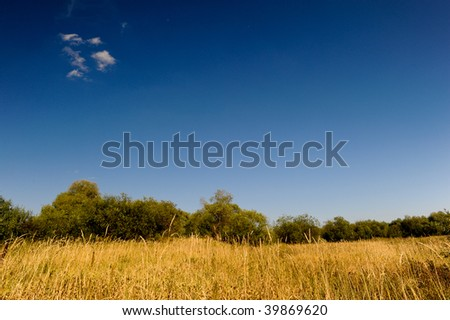 Summer landcape - stock photo