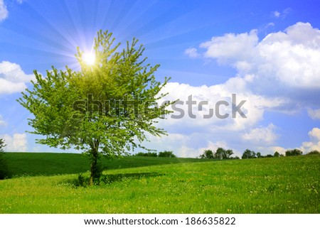 Summer landscape and green tree.