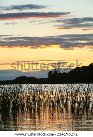 summer landscape beautiful pink sunset on the river and reeds near the shore