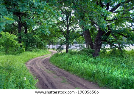 summer landscape dirt road in the meadows amid the oak grove