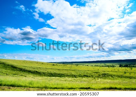 summer landscape field of green grass