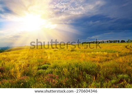 Summer landscape. Green field against a dramatic sunset - stock photo