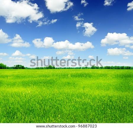 Summer landscape. Green grass and blue sky. - stock photo