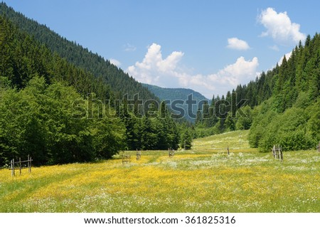 Summer landscape. Green meadow with flowers. Mountain Valley. Sunny day, good weather. Carpathians, Ukraine, Europe. Beautiful world - stock photo