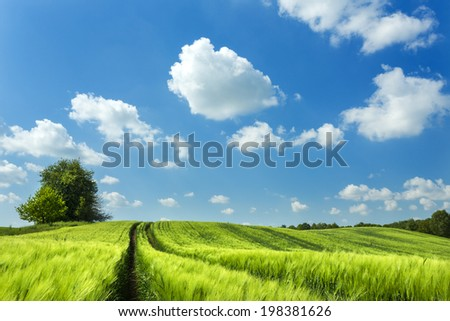 Summer landscape in north Poland. Pomerania district./ Summer field landscape - stock photo