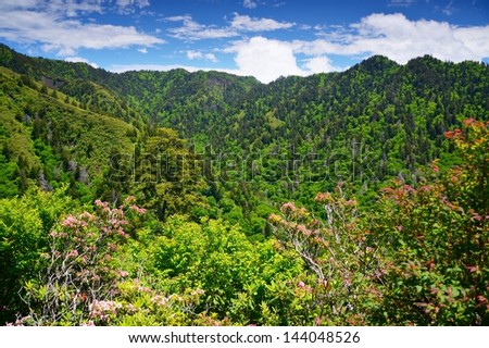 Summer landscape in the Smoky Mountains near Gatlinburg, Tennessee. - stock photo