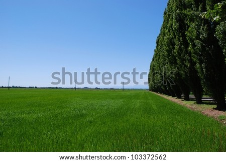 Summer landscape of flat farmland and perspective row of trees, Po valley, Italy - stock photo