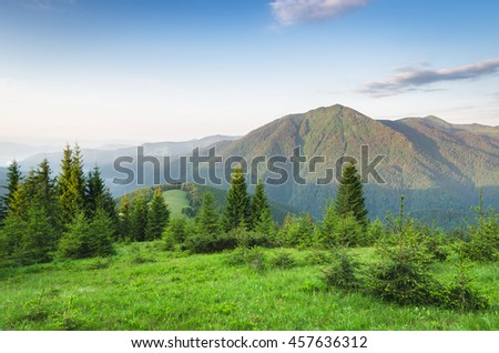 Summer landscape on a sunny morning. Spruce forest in the mountains. Green grass in the meadow. Beauty in nature - stock photo
