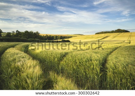 Summer landscape over agricultural farm fields of crops - stock photo